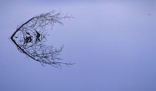 Angelfish - Image by Brian C Cyr